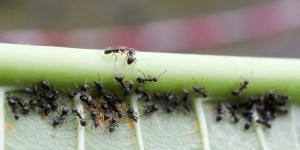 Cómo eliminar las hormigas del huerto