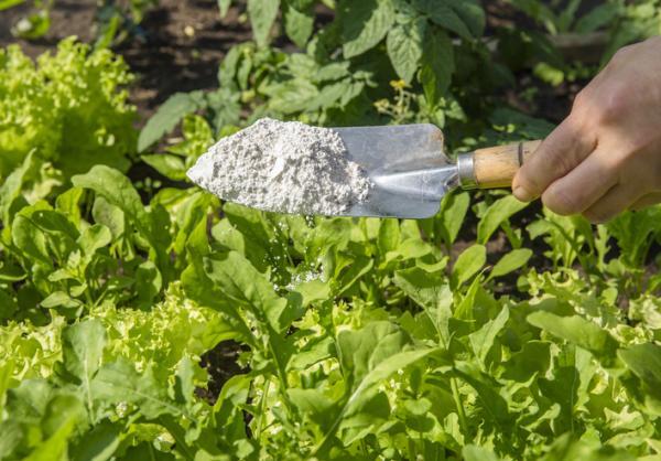 Cómo eliminar las hormigas del huerto - Tierra de diatomeas para eliminar las hormigas