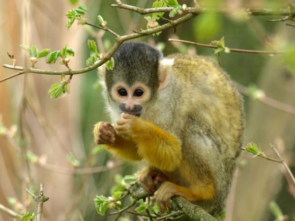 Deforestación del Amazonas: causas y consecuencias - Consecuencias de la deforestación de la selva del Amazonas