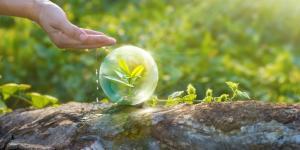Por qué es importante el agua para los seres vivos