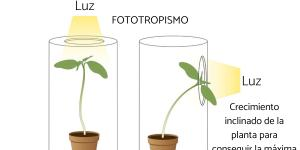 Tropismo: qué es, tipos y ejemplos