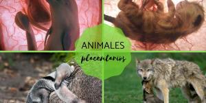 Placentarios: qué son, características, clasificación y ejemplos