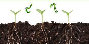 Cómo se comunican las plantas