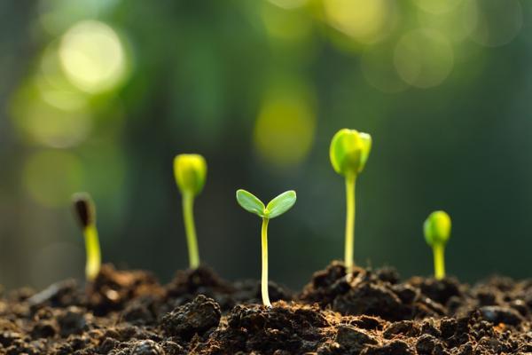 Cómo se comunican las plantas - Cómo se comunican las plantas entre sí