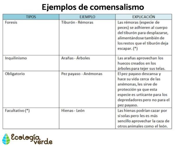 Qué es comensalismo: definición y ejemplos - Ejemplos de comensalismo
