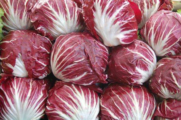 14 tipos de lechugas - Radicchio