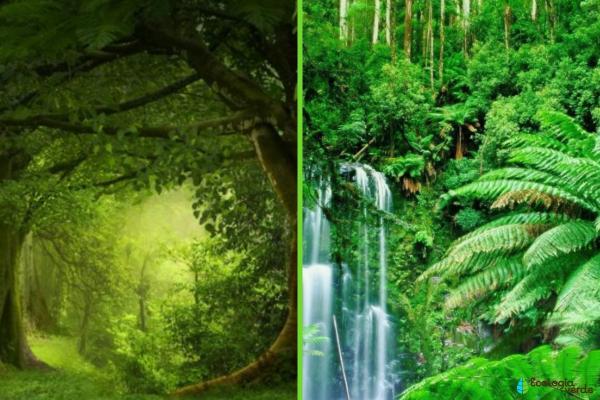 Diferencia entre bosque y selva