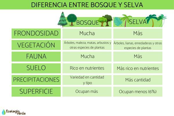 Diferencia entre bosque y selva - Diferencias entre bosques y selvas