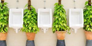 Orina como abono ecológico para la agricultura y jardinería