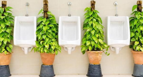 285b31117 Orina como abono ecológico para la agricultura y jardinería