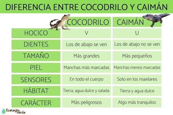 Diferencia entre cocodrilo y caimán - Diferencia entre cocodrilo y caimán