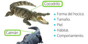 Diferencia entre cocodrilo y caimán