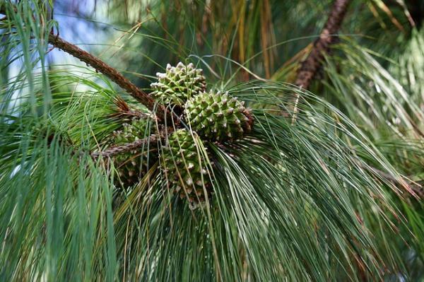 Partes de la semilla y sus funciones - Plantas con semillas: ejemplos