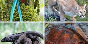 +15 animales en peligro de extinción en Guatemala