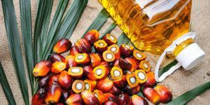 Por qué es tan malo el aceite de palma