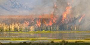 Pérdida de biodiversidad en Argentina: causas y consecuencias