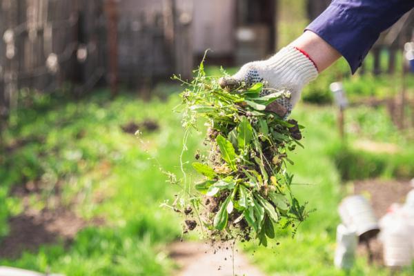 Arreglar un jardín, ¿cómo hacerlo? - ideas y consejos - Cómo arreglar un jardín descuidado – consejos