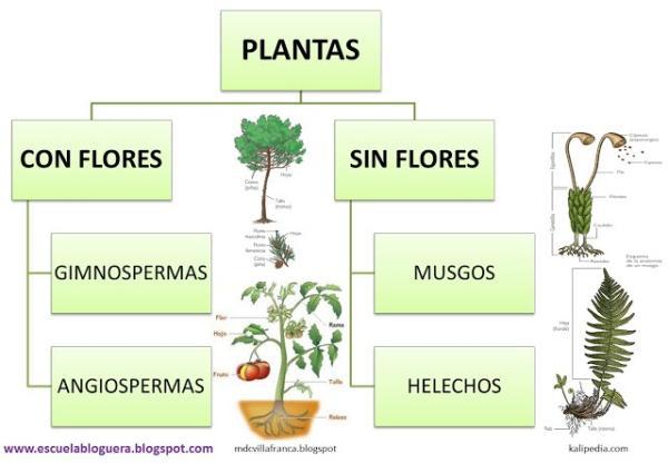 Tipos O Clases De Plantas Clasificación Por Tamaño Reproducción Y Duración