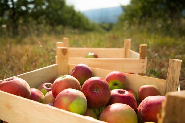 Cómo evitar el cambio climático - Consume productos de temporada y productos locales