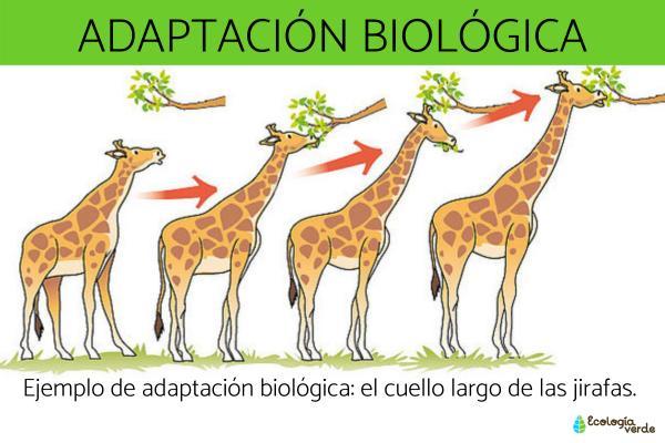 Adaptación biológica: qué es, tipos y ejemplos