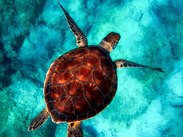 Día Mundial de los Océanos - Día Mundial de los Océanos: origen y cuándo se celebra