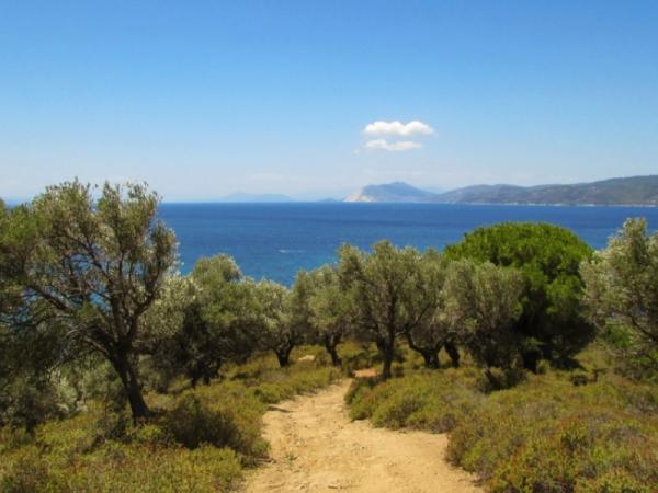 Bosque mediterráneo: características, flora y fauna - Qué es el bosque mediterráneo