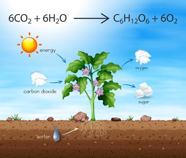 Organismos productores: qué son y ejemplos - Qué son los organismos productores