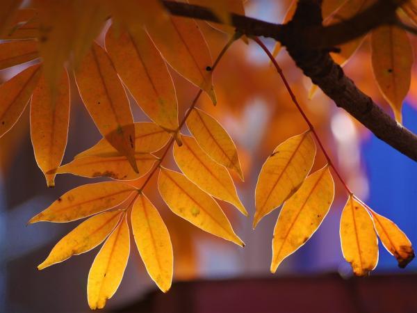Diferencias entre plantas de hoja perenne y plantas de hoja caduca - Qué son las plantas de hoja caduca
