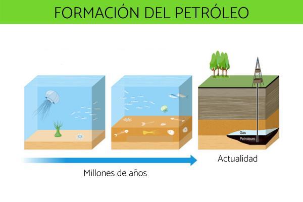 Cómo se forma el petróleo - Formación del petróleo