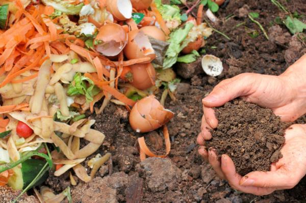 Cómo hacer crecer las plantas más rápido - Abono para que crezcan más rápido las plantas