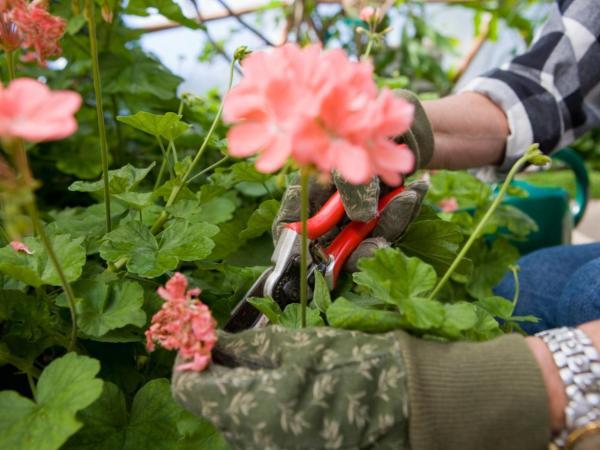 Cómo hacer crecer las plantas más rápido - Podar las plantas para que crezcan más rápido