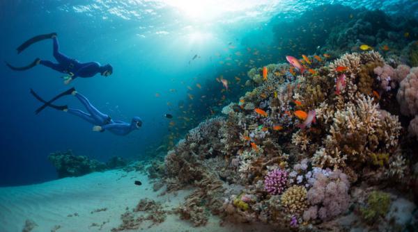 Fondos marinos: qué son, tipos y fotos - Qué son los fondos marinos