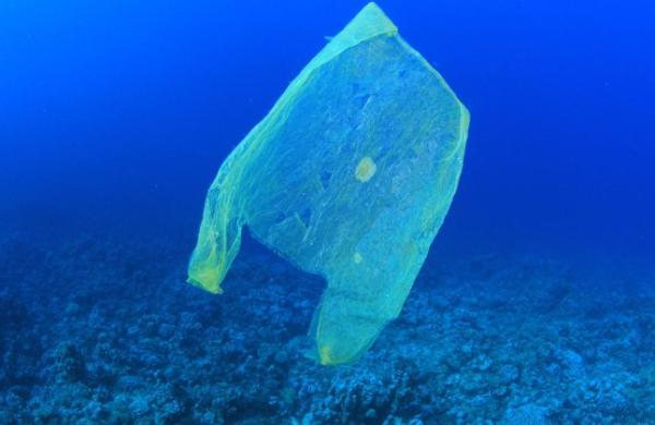 Biodegradación de plásticos: qué es y métodos - Biodegradación de plásticos, ¿qué es?