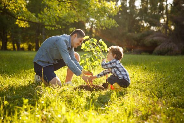 Qué necesitan las plantas para vivir - Qué hace especiales a las plantas