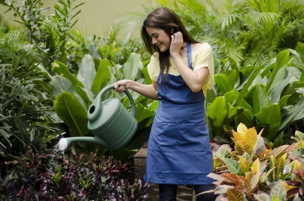 Qué necesitan las plantas para vivir - Qué necesita una planta para vivir