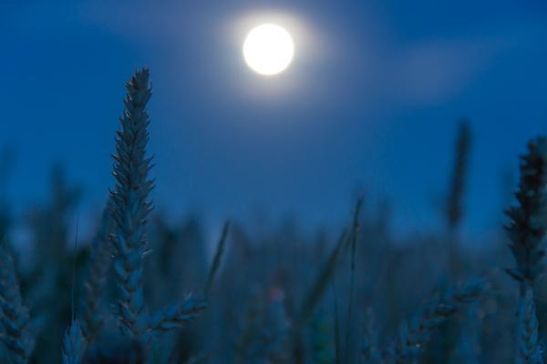 Cuál es la influencia de las fases de la luna en la agricultura