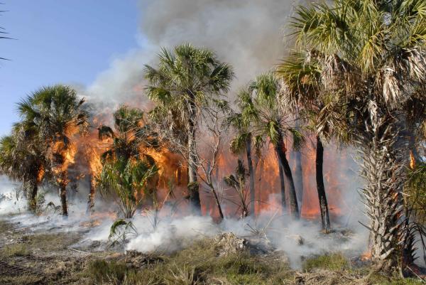 Consecuencias de un incendio forestal - Qué hacer si hay un incendio forestal