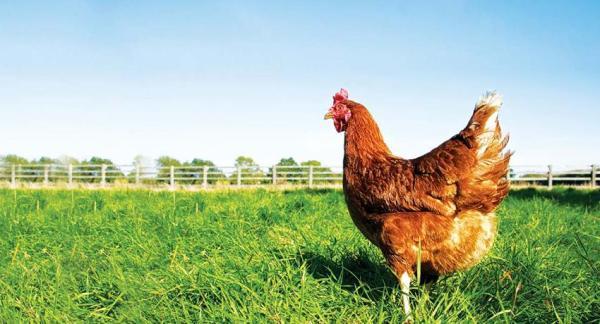 Beneficios de la comida ecológica - ¿Tenemos un huerto propio?
