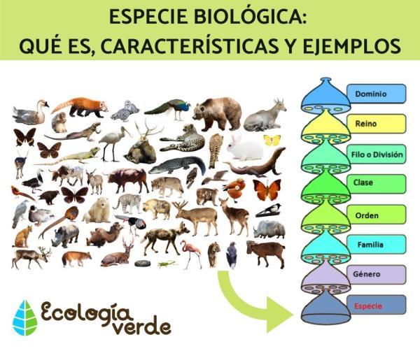 Especie biológica: qué es, características y ejemplos