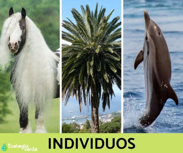Niveles de organización ecológica: cuáles son y ejemplos - Nivel de organización ecológica 1: individuos u organismos - con ejemplos