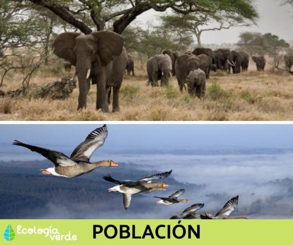 Niveles de organización ecológica: cuáles son y ejemplos - Nivel de organización ecológica 2: población - con ejemplos