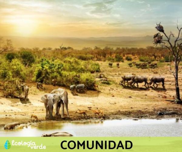 Niveles de organización ecológica: cuáles son y ejemplos - Nivel de organización ecológica 3: comunidad - con ejemplos