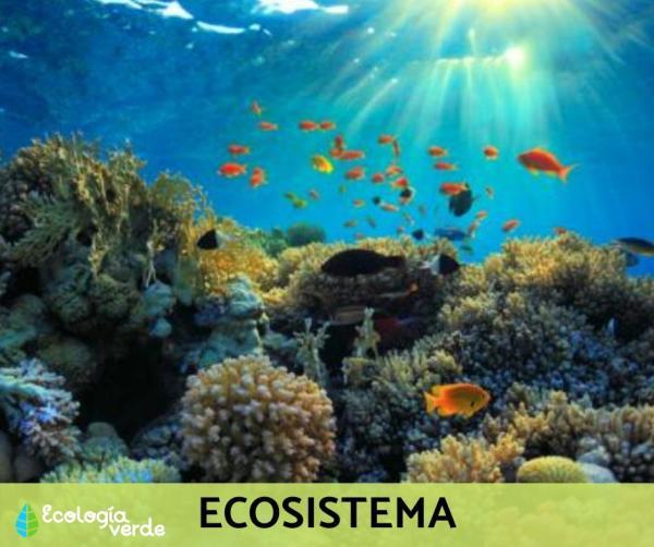 Niveles de organización ecológica: cuáles son y ejemplos - Nivel de organización ecológica 4: ecosistema - con ejemplos