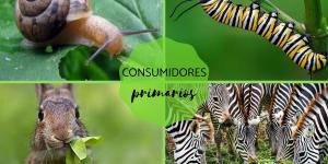 Consumidores primarios: qué son y ejemplos