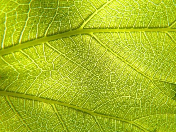 Por dónde respiran las plantas y cómo lo hacen - Por dónde respiran las plantas