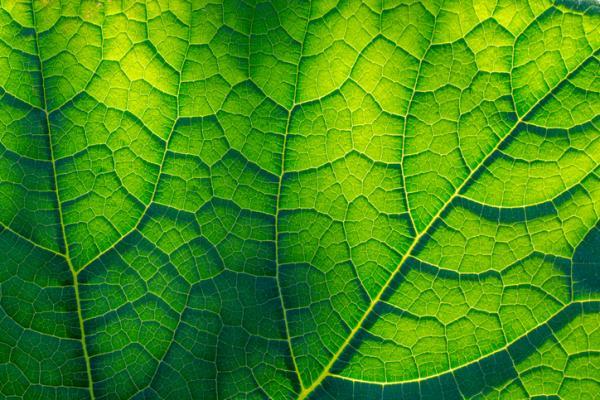 Por dónde respiran las plantas y cómo lo hacen