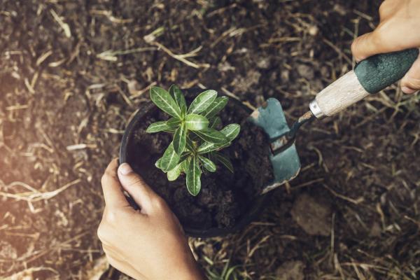 Por qué se doblan los tallos de las plantas - Falta de luz