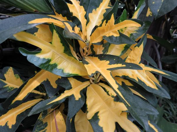 Hojas amarillas en plantas: por qué salen y soluciones - Planta con hojas amarillas por suelo pobre