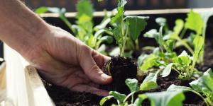 Por qué se doblan los tallos de las plantas