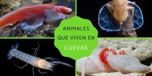 Animales que viven en cuevas